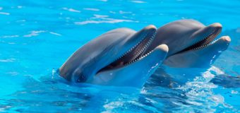 Dolphins may also fall prey to Alzheimer's