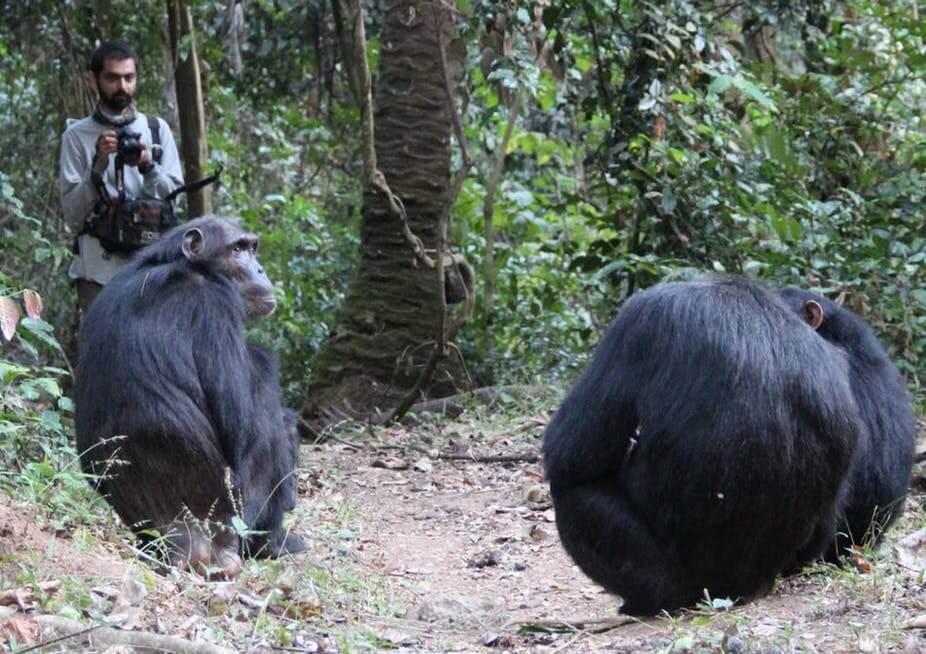 Nisarg Desai observes wild chimps