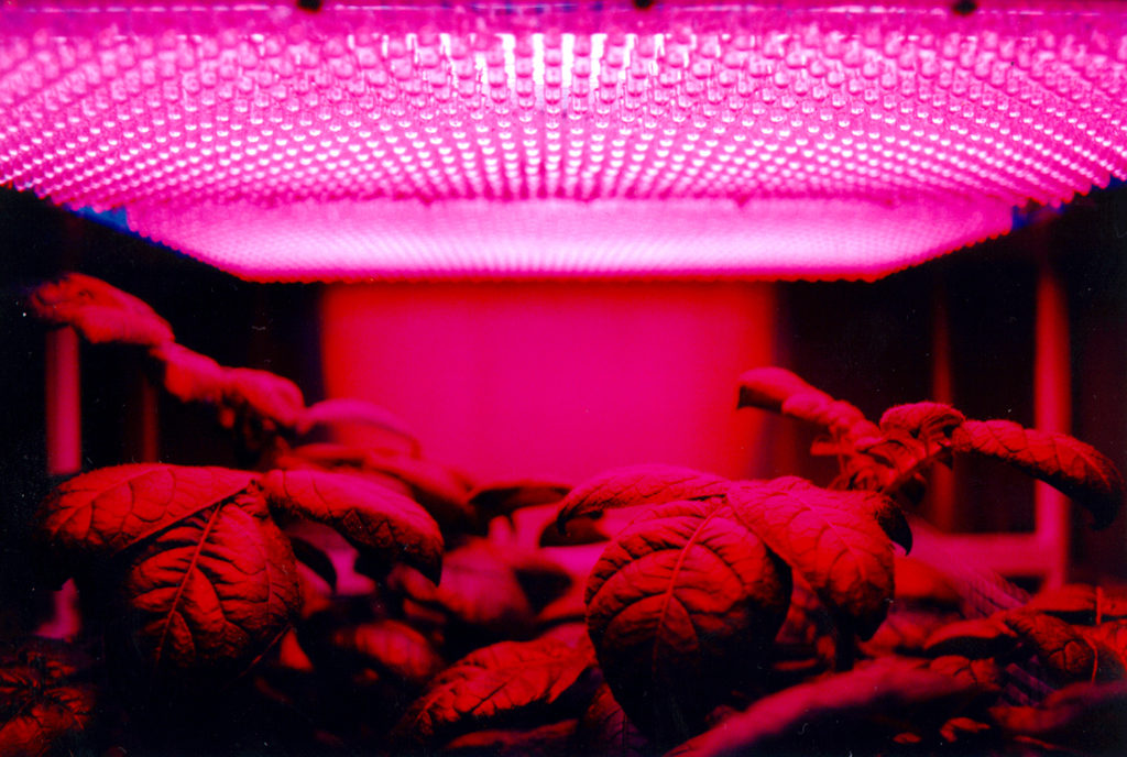 Red light diodes help plants grow away from sunlight.