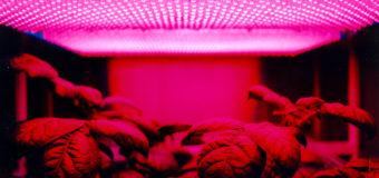 Micro-naps for plants