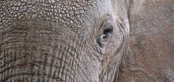 Of animal memory and Alzheimer's