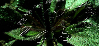 How plants can tell time –  without a brain
