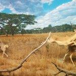 Do wild animals get PTSD?